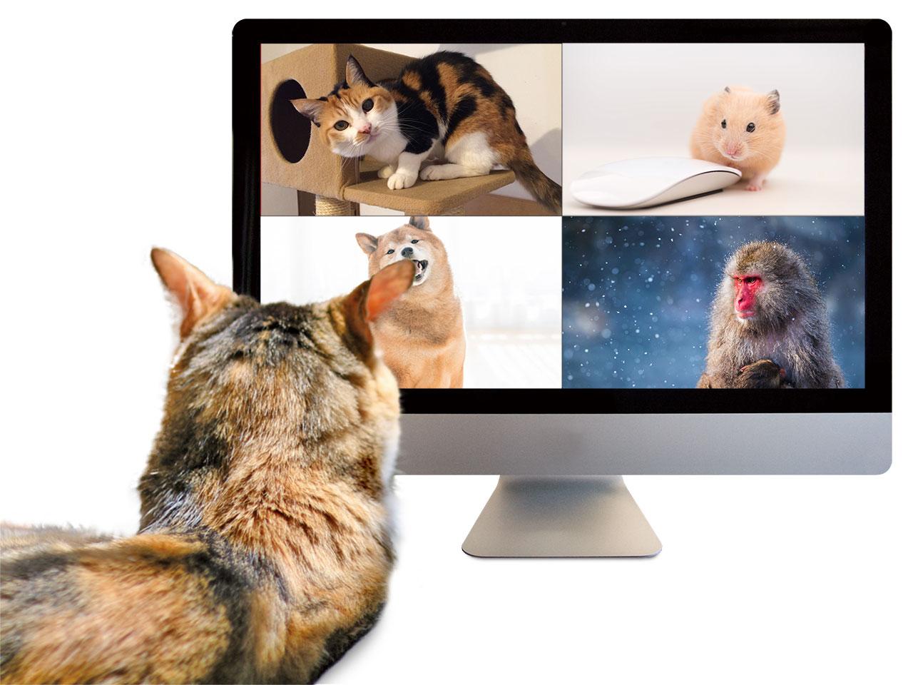 Web会議はじめました。